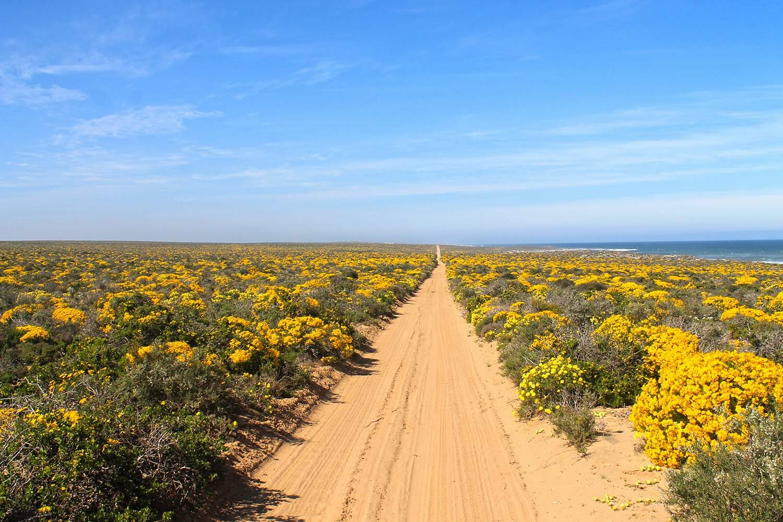 Namaqua National Park on the Cape West Coast